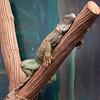 Rhenen - Ouwehands Zoo 2017-8595 (Quistnix!) Tags: 2017 ouwehandszoo dierenpark zoo
