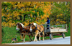 Bringing In Wood For The Winter (ghostlyfour2) Tags: amish pennsylvania ohio buggy horse wheel wood road autumn fall canon leaves leaf mums hay bale red yellow orange crisp chilly cool nature xt canonxt