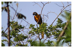 Portfólio Rodrigo Amendola (Rodrigo Amendola Fotografia) Tags: brasil paisagens viagens animais flora fauna cerrado pantanal sertão
