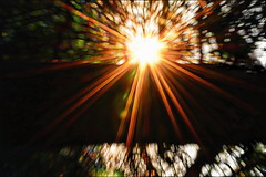 Eclipse Practice (Caroline.32) Tags: slidersunday happyslidersunday starburst trees sunset nikond3200 55300mmlens pixelexplosion abstract