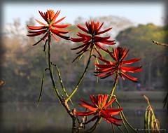 Sun and flowers (elianek) Tags: flower flowers nature natureza flores zoom park parque saojosedoscampos brasil brazil red vermelha