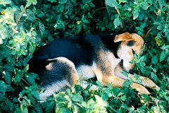 CNV00013 (Campbell.Martin) Tags: dog africa african film plants green