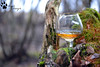Alcohol in the woods (AngelsDiarysPhotography) Tags: alcohol alkocol woods captain captainmorgan glas nikon nikond nikond31 nikond3100 angelsdiary angelsdiarysphoto angelsdiarysphotography angelsdiaryphotographer photograper photography