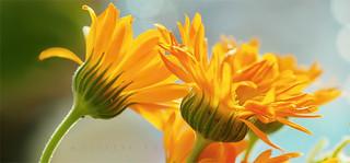 Orange Petals P8241393
