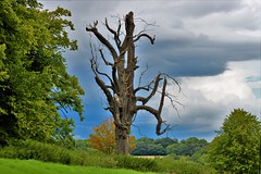 Beauty in Death (stellagrimsdale) Tags: tree sky clouds dead green landscape trees