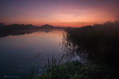 IMG_4812 (figoosia) Tags: podlasie natura narew sunrise sky landscape poland