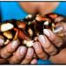 Peru's nut collectors