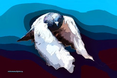 DOVE FLYING TOWARDS PEACE. (Viktor Manuel 990.) Tags: dove paloma peace paz painting pintura digitalart artedigital surrealism surrealista querétaro méxico victormanuelgómezg