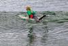 AY6A0817 (fcruse) Tags: cruse crusefoto 2017 surferslodgeopen surfsm surfing actionsport canon5dmarkiv surf wavesurfing höst toröstenstrand torö vågsurfing stockholm sweden se