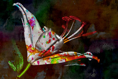 Lilly 2 (andycurrey2) Tags: lily colours paint art spatters red yellow green white wierd photoshop flower floral flora nature abstract