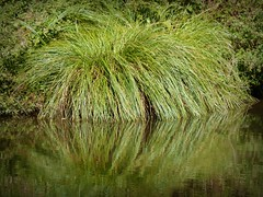 2017-09-20 Wandignies Hamage (17)La Scarpe (april-mo) Tags: grass reflection