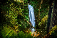 The Silver Ribbon.  Explore #6 (Photography by Julia Martin) Tags: photographybyjuliamartin burnettfallsbccanada ancientwoodland verdant waterfall silverribbon ferns dappledlight fallentrees lichencoveredtrees eleven lush canada sunshinecoast lovelywaterfall sechelt ravine unspoilt thesilverribbon canon5dmarkiv explore