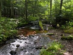 FOREST STREAM (Rob Patzke) Tags: lumix lx100 moss green nature log trees sunlight shadow