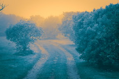 Vous me suivrez pour la suite de la balade? (8pl) Tags: chemin promenade balade herbe branches nature couleurs sark sercq matin ambiance