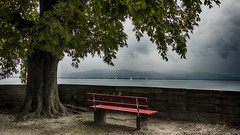 Cinq minutes... (Fred&rique) Tags: lumixfz1000 photoshop raw hdr allemagne bayern lindau lac bodensee banc promenade arbre pluie eau rouge paysage