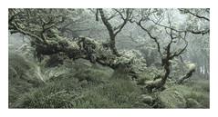 Tangled (www.neilburnell.com) Tags: wood woodland dartmoor moss trees mist chaos rocks twobridges neil burnell wwwneilburnellcom ngc wistmans