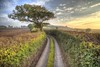 Greenlaning 269/365 (rmrayner) Tags: windingdevonrurallane lane road oaktree sunset sky clouds hedge countryside autumn tree 365project 365the2017edition 269365 devon track hdr 3xp countryroad downalane ruralscene dusk highhedges gettyimages rmrayner explore55