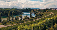 rheinaudam rhein vineyards villagealongriverrhein nature... (Photo: MusesTouch - digiArt & design on Flickr)