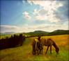 Time to go home-summer landscape (Katarina 2353) Tags: landscape summer zlatibor serbia srbija sunset horses katarina2353 katarinastefanovic