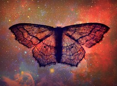With his wings unfurled he travels the stars.... (TempusVolat) Tags: picmonkey fantasy alien flyer flight wings butterfly moth stars sky intergalactic traveller travel warp spaceman space lightyear lightyears galaxy starman garethwonfor tempusvolat mrmorodo gareth wonfor tempus volat canon eos 60d wing arms outstretched flyngman dream dreamer dreaming carinanebula carina