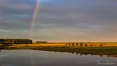 Rainbow (BraCom (Bram)) Tags: bracom rainbow regenboog speigeling reflection cows koeien trees bomen sky evvenig avond windmills windmolens landscaep landschap water dirksland goereeoverflakkee breedegooi zuidholland nederland southholland netherlands holland widescreen 169 bramvanbroekhoven nl