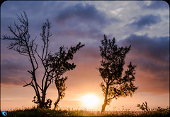 WIndow on Happiness (bffpicturesworld) Tags: tree sunset goldenhour wow ilovemyjob happiness shading beautiful iledelareunion reunionisland island