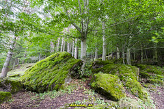 DSC_6997 (kbl phtogaphy) Tags: roja naturaleza paisaje nikon nikon5100 samyang samyang10mm árboles bosque montañas pirineos
