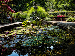 The Secret Garden Fountain (Mildred Alpern) Tags: pool garden statues benches lotusflowers reflections plantings