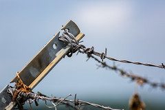 8/12 None Shall Pass (Karol A Olson) Tags: airportcafe montgomerycountyairpark airport aug17 fence rust barbedwire project3652017 mdpd2017