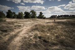 Chemins de Loire (Bertrand Thiéfaine) Tags: 2017 allier becdallier d750 loire cher paysage chemin graminés nature arbres nuages ciel