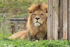 Yorkshire Wildlife Park (KillamarshianUK) Tags: yorkshire wildlife park nikon coolpix b700 animals