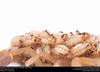 Striped Bark Scorpion  (Buthidae, Centruroides vittatus (Say)) (insectsunlocked) Tags: arachnida scorpiones buthidae centruroides centruroidesvittatus stripedbarkscorpion scorpion insectsunlocked santillanaale