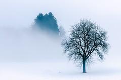 fog (sigiha1953) Tags: nikond300 winter nebel fog schnee snow landschaft landscape nikon7003000mmf4556 2011