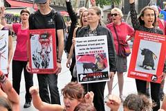 P1020685 (www.deshommesetdesanimaux.fr) Tags: corrida anticorrida nocorrida stopcorrida barbarie cruauté paris 269lifefrance