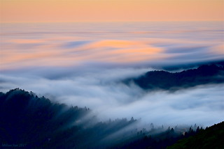 Brushwork|Marin County, California