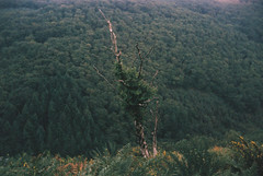 Teign Valley 1 (avenwildsmith) Tags: film 35mm nature devon countryside landscape analog analogue kodak retinette 1b grain england britain wild wilderness tree trees view valley teign 35mmfilm kodakretinette1b