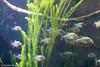 IMG_0662 (10Rosso) Tags: acqua acquario genova pesci pesce mare acquariodigenova aquarium genovaacquarium
