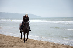 Solo (Charles_RAMOS-iVision18000) Tags: training water horse sport équitation sable embruns brume photographie inspiration breathe vibes waves morning sea seashore shoreline cavalier action digital europe skr nikkor 105mm rscape outdoor travel normandy france leading leader photographer d7200
