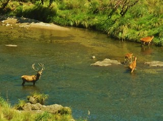 Argentina Red Stag Hunt Cordoba 53