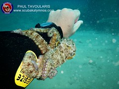 """Kalymnos Diving • <a style=""""font-size:0.8em;"""" href=""""http://www.flickr.com/photos/150652762@N02/36406136566/"""" target=""""_blank"""">View on Flickr</a>"""