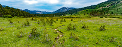 Mountain Meadow Panorama (Sweetolive999) Tags: meadow mountain path grass cloud atmosphere flower wildflower tree pine miniature spring summer green vibrant nature river stream rain wideangle landscape wild park tahoerimtrail trt rocks hills snow seasons