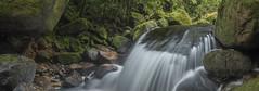 Watch your step (zebedee1971) Tags: wairere falls forest trees moss mossy rocks rocky slippery wet kaimai new zealand waikato