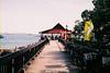 F1010025_lr (chi.ilpleut) Tags: singapore outing dailylife 2017 jubilee film ilovefilms kodakelitechrome100 kodakfilm expiredfilm grain analogue memory 漫步 過期底片 柯達 藍 蒐集記憶 照片使記憶復甦 銀鹽記憶 敘述 新加坡 ubin island green nature ilovegreen beachwalk cycling breathe takeabreak 烏敏島