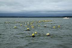 "I Mityng Triathlonowy - Nowe Warpno 2017 (108) • <a style=""font-size:0.8em;"" href=""http://www.flickr.com/photos/158188424@N04/36465693520/"" target=""_blank"">View on Flickr</a>"