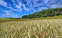 Landschaftsbild (garzer06) Tags: landschaft himmel wolken landschaftsbild groszicker blau mönchgut deutschland vorpommernrügen landschaftsfoto naturephoto grün rot gelb mecklenburgvorpommern naturfoto vorpommern naturephotography inselrügen naturfotografie insel landscapephotography rügen getreide getreidefeld baum wald landschaftsfotografie wolkenhimmel