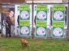 Dogs against fascism. Milano, March 2010. (joelschalit) Tags: italy greatrecession economiccrisis poverty silvioberlusconi populism neoliberalism italia capitalism milan milano lombardy lombardia leganord umbertobossi piazzaleloreto