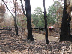 Humevale Road bridge blocked off to Kinglake West at Scrubby Creek; Thursday, 12 March, 2009 (Yarra Plenty Regional Library Local History) Tags: fire damage humevale road bushfires dickinson collection victorian black saturday 2009 scrubby creek blacksaturdaybushfires2009 dickinsoncollection firedamage humevaleroad scrubbycreek victorianbushfires victoria australia au