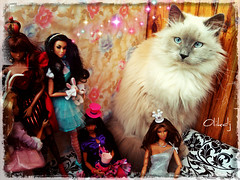 C360_2013-10-06-14-15-28 (Olikdj) Tags: fr fashionroyalty regdoll erin integritytoys poppyparker colette cat