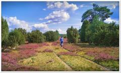Sackgasse in der Heide? (Don111 Spangemacher) Tags: himmel heide heideblüte hochsommer landschaft lüneburgerheide niedersachsen natur naturschutzgebiet naturpark kulturlandschaft park pflanzen erika reisen romantik sommer südheide