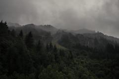 Cloud Worlds (Netsrak) Tags: baum bäume nebel mist fog wolke wolken alpen kleinwalsertal natur